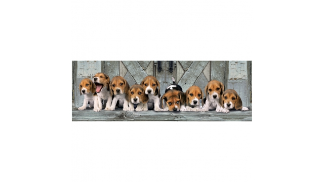 Clementoni High Quality Collection Panorama Puzzel Beagles 1000 Stukjes
