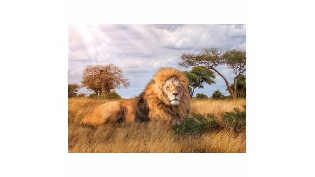 Clementoni High Quality Collection Puzzel The King 1000 Stukjes